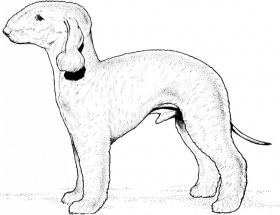 Dog Breed Coloring Pages Images Kb Courtesy Id 43737 276681 Dog