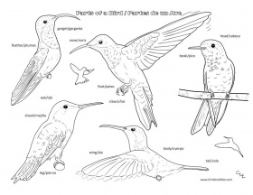 Bird Coloring Pages for Kids -