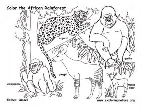 color the african rainforest. rainforest cute animals coloring ...