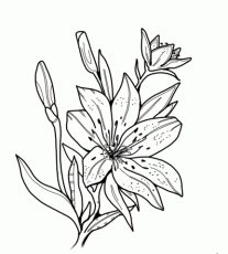 Tiger Lily coloring pages