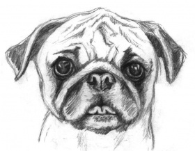 Coloring or pencil coloring | Pug ...