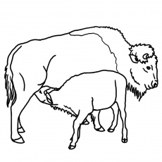 Clip Art Black And White Buffalo Clipart - Clipart Kid
