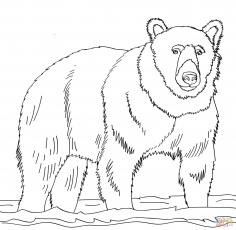 Brown bears coloring pages | Free Coloring Pages