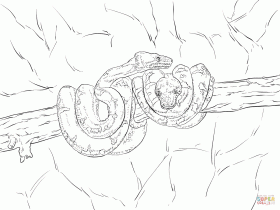 7 Pics Of Snakes Boa Constrictor Coloring Pages - Boa Constrictor ...