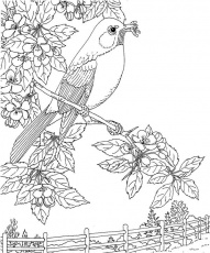 Michigan Robin Coloring Page | Purple Kitty