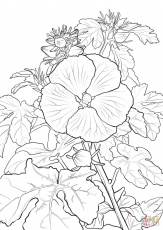 Pua Aloalo or Hawaiian Hibiscus coloring page | Free Printable ...