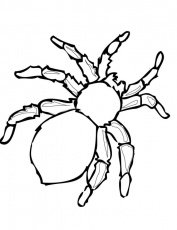 Coloring Pages : Awesome Spider Coloring Pages Hulk Coloring Pages' Black  Widow Spider Wiki' Lego Iron Spider Coloring Pages and Coloring Pagess