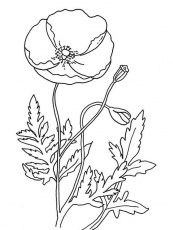 Remembrance Day with Poppy Coloring Page | Color Luna