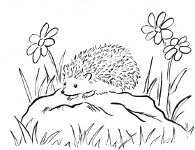 Hedgehogs coloring pages