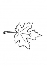 Jungle Leaf Coloring Pages Coloring Pages Of Autumn Leaf