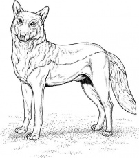 Wolf dog coloring pages kids colouring pages coloring home for Grey wolf coloring pages