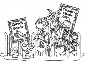 Printable Tomato and Carrot Seeds coloring page for both aldults ...