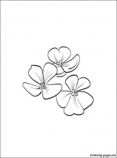 Violet printable and coloring page | Coloring pages