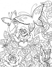 Butterfly Garden Coloring Pages Free Printable Butterfly Coloring ... | Coloring Pages Butterfly Garden  | title