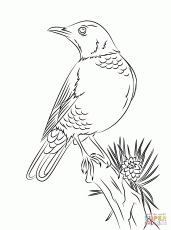 Robins coloring pages | Free Coloring Pages