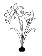 Search Results » Black And White Coloring Pages For Kids
