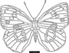 Big Butterfly Coloring Page for Kids Printable | eColoringPage.com