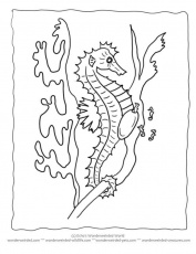 Free Seahorse Coloring Pages | cavallets de mar