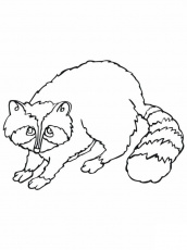 Raccoon coloring pages to print for kids | Coloring Pages