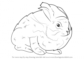 Learn How to Draw an Angora Rabbit (Other Animals) Step by Step ...