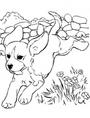 Raskraski Sobachki Raspechatat Min Dog Coloring Pages For Kids Print Them  Online Freeures Children To Christmas – Slavyanka