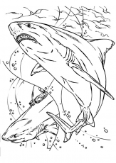Pin by Nikky H. on write it down | Shark coloring pages, Animal coloring  pages, Horse coloring pages