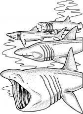 School Of Shark Jaws Coloring Pages : Best Place to Color in 2020 | Shark coloring  pages, Coloring pages, Shark jaws