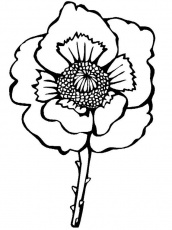 Remembrance Day or Veteran's Day Coloring Pages an Important Message -