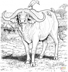 African buffalo coloring page | Free Printable Coloring Pages