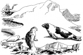 7 Pics of Seal Coloring Pages Large - Elephant Seal Coloring Page ...