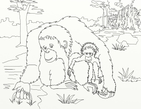 Cute Baby Orangutan Coloring Page Free Printable Coloring Pages Coloring Home