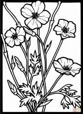 Poppy Coloring Pages - Coloring Page