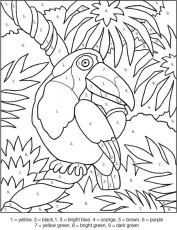 toucan coloring by numbers - games the sun | games site flash