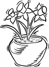 Daffodil Coloring Pages - Best Coloring Pages For Kids