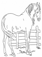 Coloring Pages Of A Horse 116 | Free Printable Coloring Pages