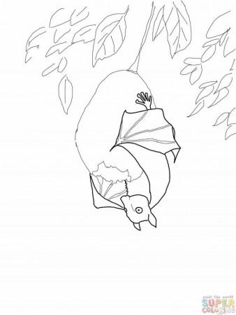 Stellaluna Worksheets | Bats - Coloring Home