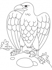 Eagle Coloring Page Images & Pictures - Becuo