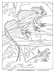 basilisk lizard colouring pages