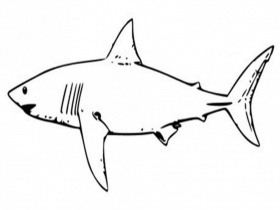 shark coloring pages for kids coloringpaperz 291235 manatee