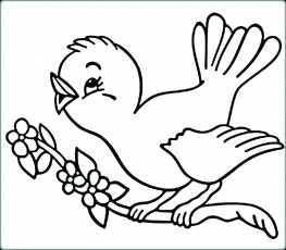 Birds Coloring Pages Picture - Whitesbelfast
