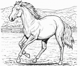 Horse Coloring Pages - Z31 Coloring Page
