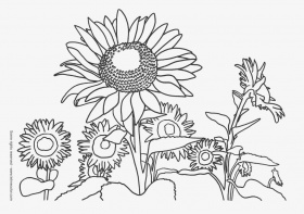sunflower coloring pages : Printable Coloring Sheet ~ Anbu
