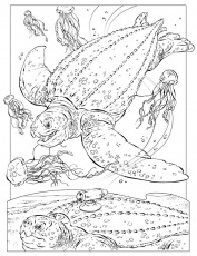 Killer Turtle Ocean Animal Coloring Pictures