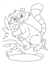 racoon coloring page