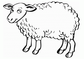 t sheep Colouring Pages