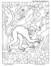 monkey coloring pages | Animal Coloring Pages for Kids