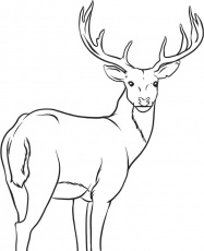 printable deer coloring pages