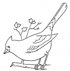 Line Art - Coloring Page - Cardinal on Branch