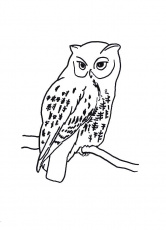 Owl Coloring Page Book For Kids