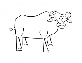 waterbuffalo Colouring Pages